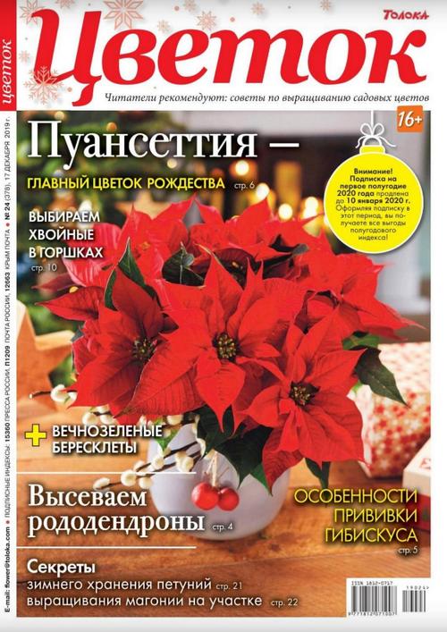 Цветок №24 (декабрь/2019)