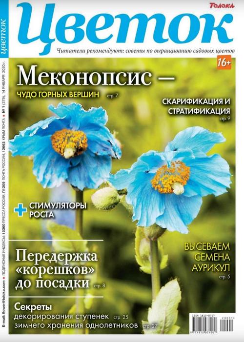 Цветок №1 (январь/2020)